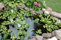 Koi Ponds Rochester NY