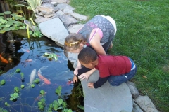 Fish And Supplies Koi Ponds Rochester NY