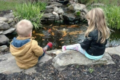 Pond Installation, Maintenance And Services Rochester NY