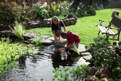 Fish Pond Builders Rochester NY