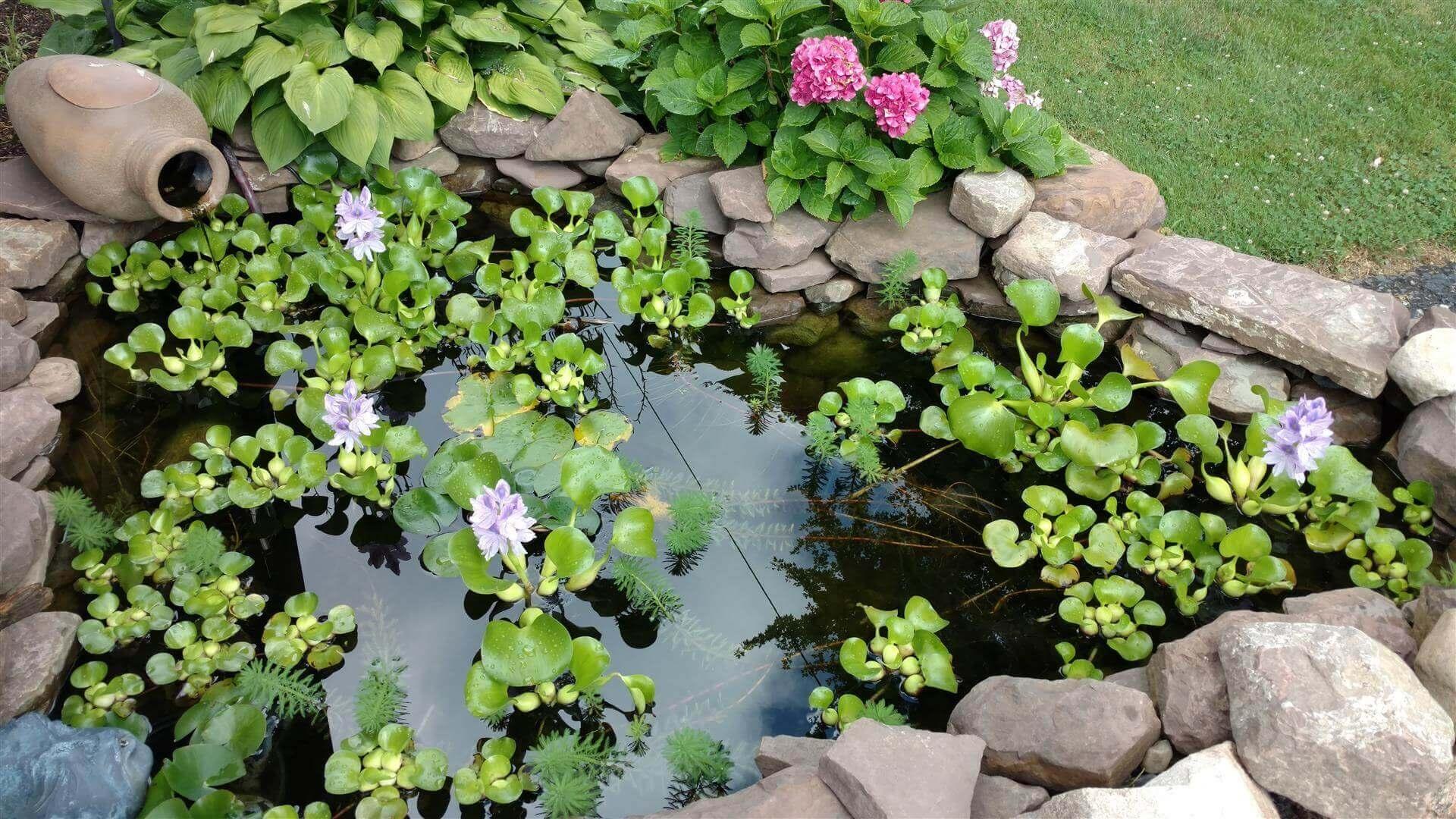 Pond installation maintenance services rochester ny koi for Koi pond care