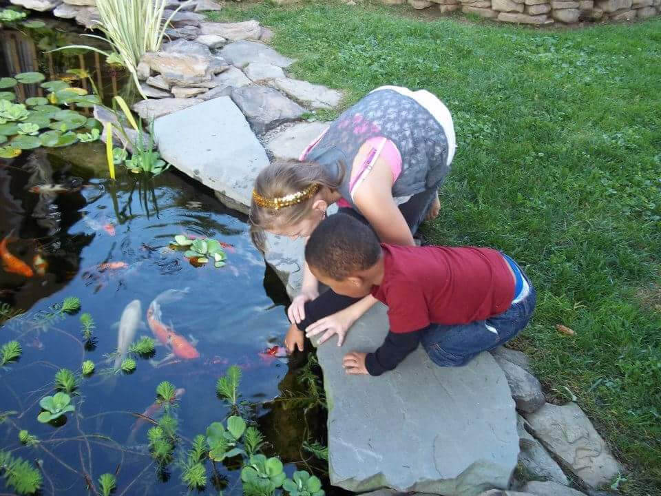 Pond installation maintenance services rochester ny koi for Koi fish pond maintenance